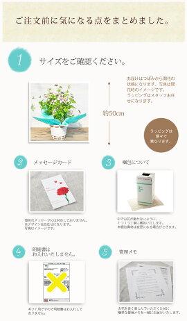 【送料無料】クレマチスビエネッタ鉢花【メッセージカード】【母の日ギフト】