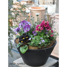 専門店の寄せ植え【冬の寄せ植え】寄植え硬質プラ鉢8号送料無料