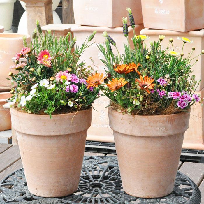専門店の寄せ植え ギフト【テラコッタ】選べる雰囲気 寄植え テラコッタ鉢 送料無料