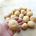 予約殺到!出島(デジマ でじま) ジャガイモ 広島の優良種芋 1kg【充填時】8月ごろよりお届け
