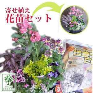 寄せ植え用花苗 セット 花苗と培養土のセット 実用的苗 寄せ植えに手入れ ギフト 季節の花 宿根草 多年草 一年草 フラワー 福袋