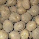 キタアカリ(北あかり) ジャガイモ 種芋 1kg 充填時 8から9月より入荷次第お届け予定 珍しい【限定販売】秋植えではレアな種