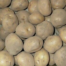 キタアカリ(北あかり) ジャガイモ 種芋 1kg【充填時】【8から9月より入荷次第お届け予定】【珍しい】【限定販売】【秋植えではレアな種】