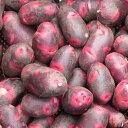 【出荷中】デストロイヤー 種芋 ジャガイモ じゃがいもの種 合計 500g【俵屋】【検査合格済】【サイズ混合】【春植え…