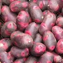 ジャガイモ種芋