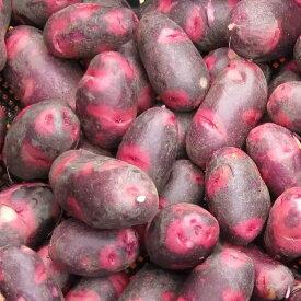 【予約受付中】デストロイヤー 種芋 ジャガイモ じゃがいもの種 合計 1kg【俵屋】【検査合格済】【サイズ混合】【春植えジャガイモ】
