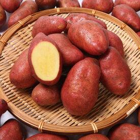 【予約受付中】タワラヨーデル 種芋 ジャガイモ じゃがいもの種 1kg メディアで話題!【お試し送料無料!北海道沖縄東北発送不可】【検査合格済】【サイズ混合】【春植えジャガイモ】
