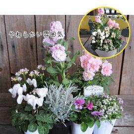 寄せ植え用花苗セット花苗と培養土のセット実用的苗寄せ植えに手入れギフト季節の花宿根草多年草一年草フラワー福袋