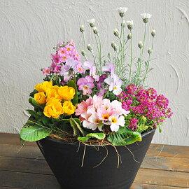 専門店の寄せ植えギフトワンランク上選べる雰囲気寄植え選べる鉢8号送料無料
