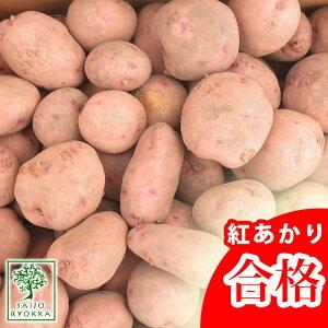 じゃがいも 種芋 ベニアカリ 紅あかり 種芋 ジャガイモの種 1kg【検査合格済】【サイズ混合】【春植えジャガイモ】【他のジャガイモの種なら同梱可能】