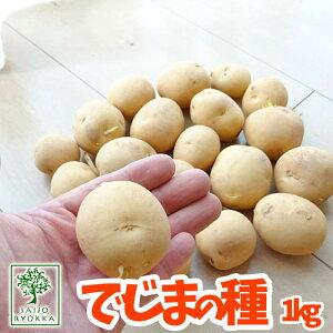 【予約秋植え】ジャガイモの種芋!出島(デジマ でじま) ジャガイモ 広島の優良種芋 1kg【充填時】