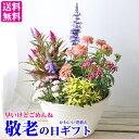 早いけどごめんね 敬老の日の寄せ植えギフト かわいい寄せ植え 4種類の植物 敬老の日ギフト 【送料無料・北海道沖縄東北発送不可】 敬…