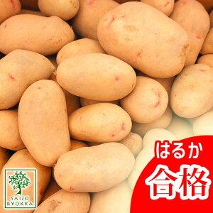 じゃがいも 種芋 はるか ジャガイモ じゃがいもの種 1kg【検査合格済】【サイズ混合】【春植えジャガイモ】【他のジャガイモの種なら同梱可能】
