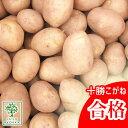 じゃがいも 種芋 十勝こがね とかちこがね 種芋 ジャガイモの種 1kg【検査合格済】【サイズ混合】【春植えジャガイモ】【他のジャガイ…