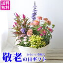 敬老の日の寄せ植えギフト 寄せ鉢 かわいい寄せ植え 敬老の日ギフト 【送料無料・北海道沖縄東北発送不可】 敬老の日2020 鉢物 実用的…