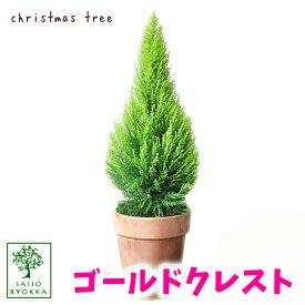 予約受付中 ゴールドクレスト おしゃれなイタリア製陶器鉢 高さ約70cm コニファー オシャレ クリスマスツリー