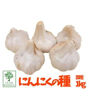 【予約】国産ニンニクの種 にんにく ニンニク 1kg(充填時) 安心【園芸専門店の野菜の種】