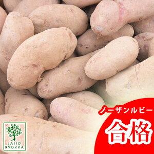 じゃがいも 種芋 ノーザンルビー 種芋 ジャガイモの種 1kg【検査合格済】【サイズ混合】【春植えジャガイモ】【他のジャガイモの種なら同梱可能】