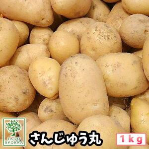 じゃがいも 種芋 さんじゅう丸 さんじゅうまる ジャガイモの種 1kg【検査合格済】【サイズ混合】【春植えジャガイモ】【他のジャガイモの種なら同梱可能】