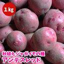 【予約秋植え】ジャガイモ種芋 アンデスレッド 種芋 1kg【充填時】珍しい赤皮、黄肉のジャガイモ 予約受付中