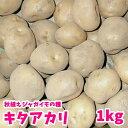 【予約秋植え】キタアカリ(北あかり) ジャガイモ 種芋 1kg 充填時 8から9月より入荷次第お届け予定 珍しい【限定販売】秋植えではレ…