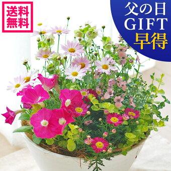 https://image.rakuten.co.jp/saijo-ryokka/cabinet/gazou7/titiyoseue.jpg