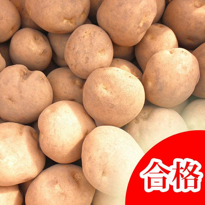 ダンシャク 種芋 ジャガイモ じゃがいもの種 10kg【男爵】【ダンシャク】【検査合格済】【サイズ混合】【春植えジャガイモ】
