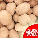 インカのめざめ 種芋 ジャガイモ じゃがいもの種 1kg【検査合格済】【サイズ混合】【春植えジャガイモ】