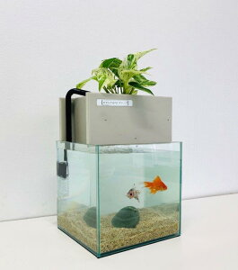 【送料無料】水替え不要水槽 せせらぎ室内ビオトープ 20cm型 (8L) 基本水槽セット 金魚 おしゃれ 水槽セット 濾過 ろ過 観葉植物 熱帯魚 インテリア 西条庭園
