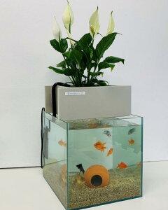 【送料無料】水替え不要水槽 せせらぎ室内ビオトープ 30cm型(27L) 基本水槽セット 金魚や熱帯魚の水槽にピッタリ、観葉植物が水をキレイにします!