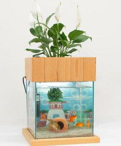 【送料無料】水替え不要水槽 せせらぎ室内ビオトープ 30cm型(27L) 基本+照明+木製枠台水槽セット 金魚や熱帯魚の水槽にピッタリ、観葉植物が水をキレイにします!
