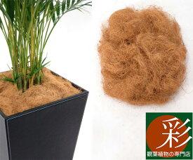鉢カバーに入れた植木鉢が見えなくておしゃれですヤシの繊維から作られたマルチング(鉢土隠し)材ココファイバー【インテリア】 観葉植物