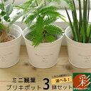 ミニ 観葉植物 選べる!かわいいブリキポット3つのセット ガジュマル・パキラ・エバーフレッシュ(ネムノキ) ・サンスベリア・シュガーバ…