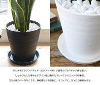 観葉植物2鉢セット6号+6号セラアート鉢ヒメモンステラサンスベリア幸福の木ウンベラータガジュマルおしゃれインテリアブラックホワイトセラート鉢
