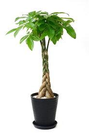 観葉植物 パキラ セラアート鉢 8号鉢 大型 インテリア 開店祝い おしゃれ ブラック ホワイト セラート鉢