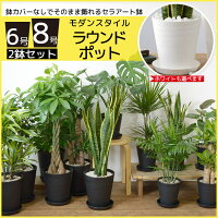 選べる2サイズ、まとめ買い!8号+6号鉢植物ブラックポット