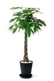 観葉植物 パキラ 10号 セラアート鉢 大型 インテリア 開店祝い おしゃれ 父の日
