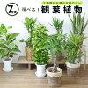 【即日発送可・急なギフトに】選べる!7種類7号鉢観葉植物