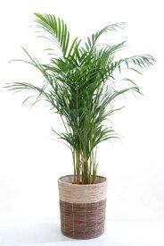 観葉植物 アレカヤシ 8号 鉢カバー付 新築祝い 開店祝い ヤシの木 大型 観葉植物 インテリアに! ビジネス即日開店 オープン