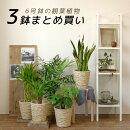 人気の6号鉢植物3点で11,980円