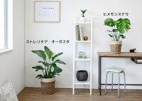 観葉植物セット8号+6号ツートーン鉢カバー付き