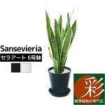 観葉植物サンスベリア・ローレンティー6号セラアート鉢大型インテリア開店祝いお祝い新築祝い