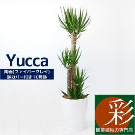 ユッカ 10号 陶器(ファイバークレイ)鉢カバー付 大型 観葉植物 インテリア アジアン おしゃれ 人気 引越し祝い 開店祝い 新築祝い お祝い 観葉植物 ユッカ