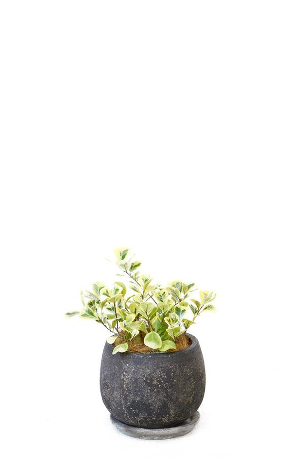 観葉植物 バルーン アンティーク ブラック フィカス トライアンギュラリス インテリア 鉢 おしゃれ オフィス セット 北欧 彩植健美セレクトポット 御祝 開店祝 開業祝 新築祝 引越祝 結婚祝 新生活 父の日