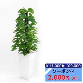 ◆限定クーポン配布中◆観葉植物 ポトス ヘゴ仕立て スクエア 白 陶器 インテリア 大型 開店祝い 新築祝い 観葉植物