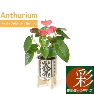 観葉植物 アンスリウム ロイヤルピンクチャンピオン ネイティブ柄 脚付きポット(大) インテリア 開店祝い お祝い 新築祝い オルテガ柄 小さい 母の日におすすめ