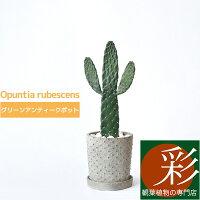 観葉植物ウチワサボテンスミエボシグリーンアンティークポットバンザイサボテンインテリア開店祝いお祝い新築祝い卓上小さいおしゃれオプンティア属