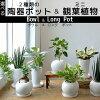 【4鉢まで送料500円】8種類から選べるミニ観葉植物白陶器のボールポットとロングポット