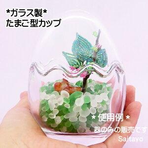 テラリウム向きガラス製卵型カップ