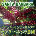 コーヒー豆 送料無料 お試し 珈琲 スペシャルティ コーヒー【スペシャルティ】ブラジル・サンタ・バルバラ農園400g